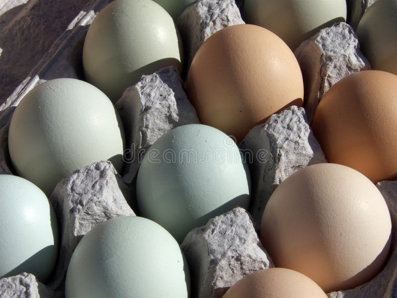 Huevos frescos fotos de archivo