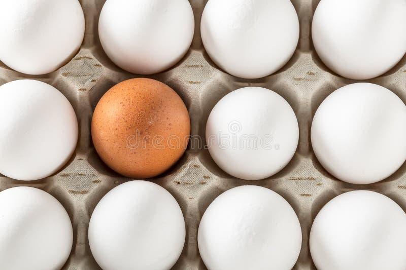 Huevos llenos en cartulina o cajas para transportar imagenes de archivo