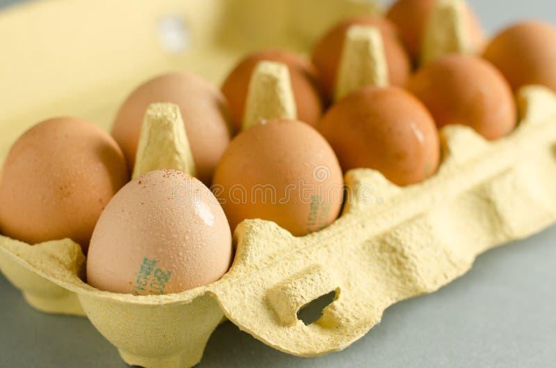 12 huevos marrones en cartón amarillo del huevo fotografía de archivo libre de regalías