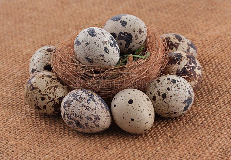 Huevos orgánicos de las codornices imágenes de archivo libres de regalías