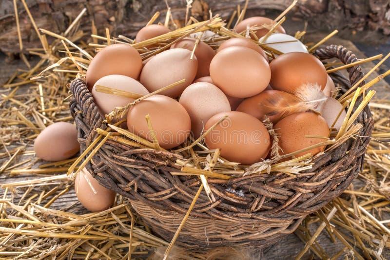 Huevos orgánicos nacionales foto de archivo libre de regalías
