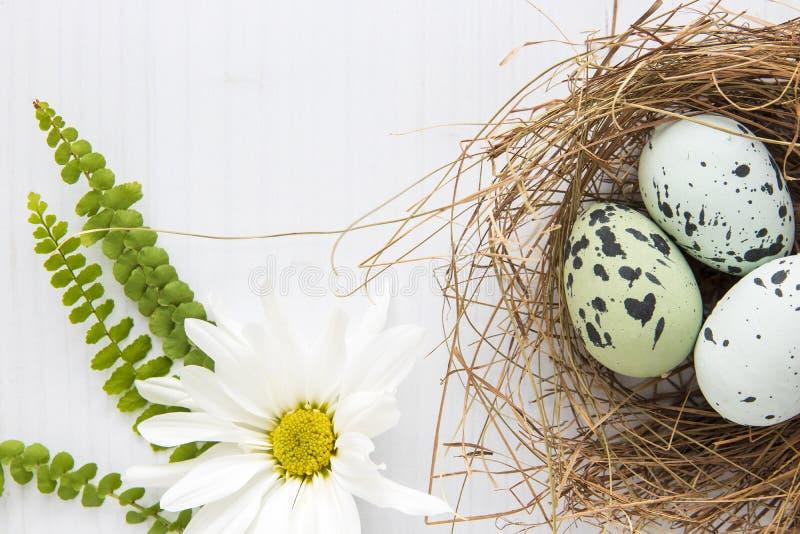 Huevos pintados del petirrojo en jerarquía de la paja con la margarita blanca en fondo brillante Alto clave Copie el espacio esti fotografía de archivo libre de regalías