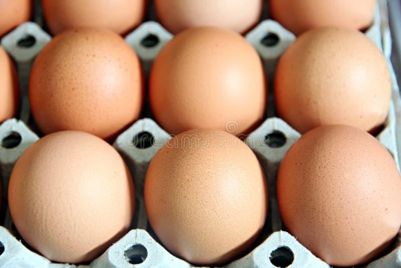 Huevos que están en el panel. foto de archivo