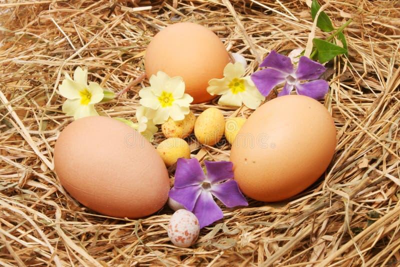 Huevos y flores del resorte fotos de archivo