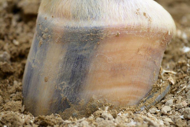 Huf des Pferds. lizenzfreie stockbilder