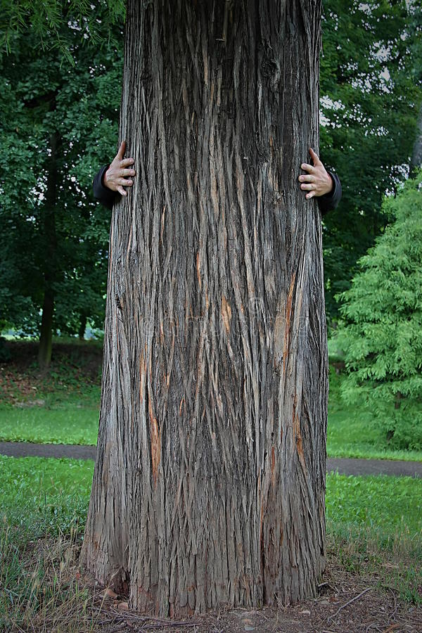 Hug a big tree in the untouched nature royalty free stock photo