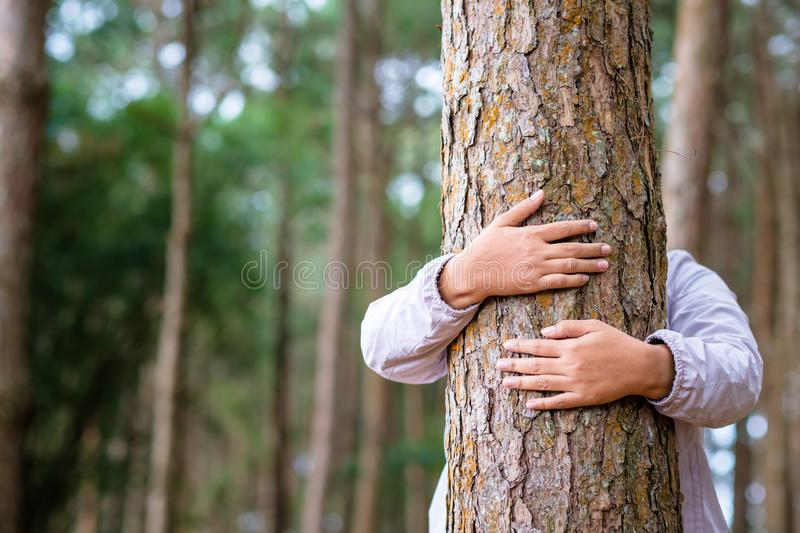 Hug the Pine Tree in the Forest. Woman give a hug on a pine tree in the forest for environment concept royalty free stock photography