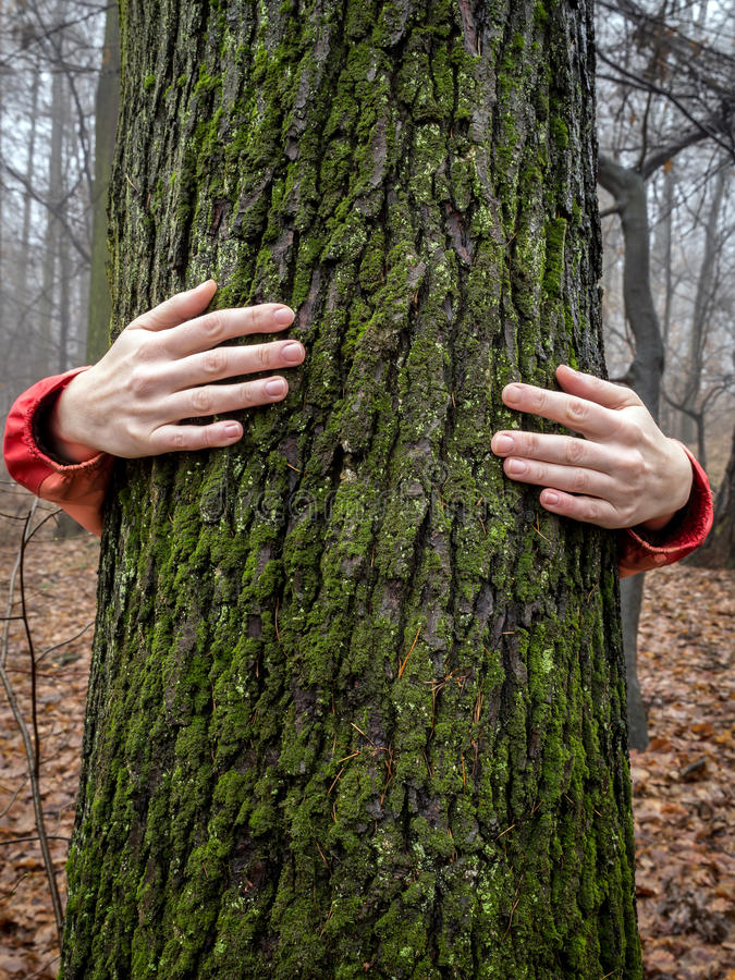 Hug a tree. Woman hugging a tree in the forest royalty free stock images