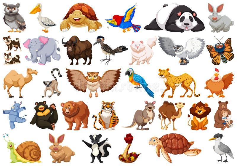 Huge animal set with bear, rhino, rabbit, lion, panda, elephant and more royalty free illustration
