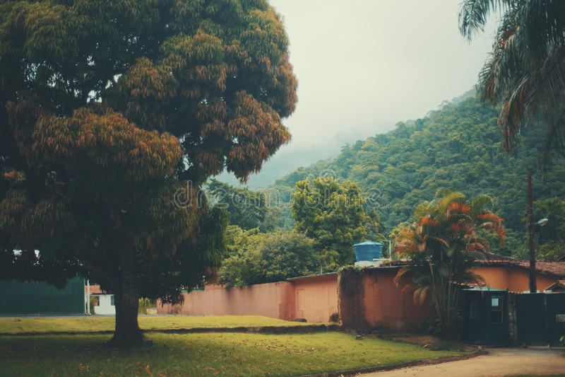 Huge beautiful tree in Botanical garden. Huge beautiful tree and rainforest mountains behind of it in Jardim Botanico garden of Rio de Janeiro, Brazil, low royalty free stock photography