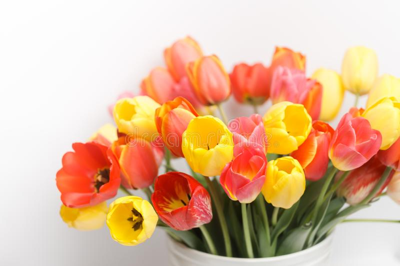 Huge bouquet of yellow and red tulips standing in a white large vase against the background of a white wall, close-up royalty free stock photography