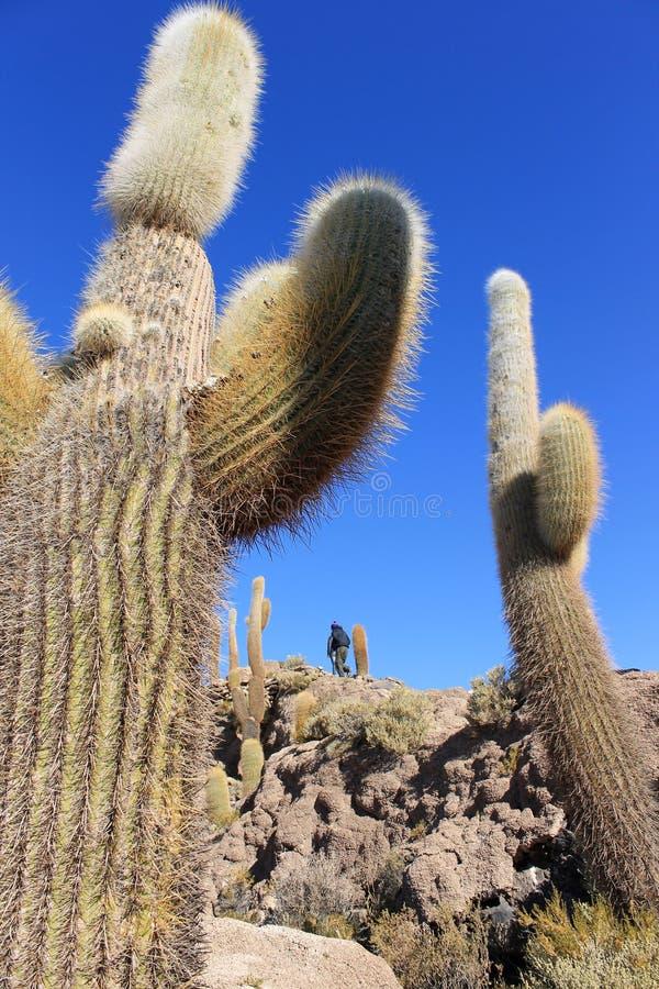 Huge Cactus, Salar de Uyuni, Bolivia