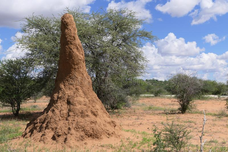 Huge dwelling for termites stock photos