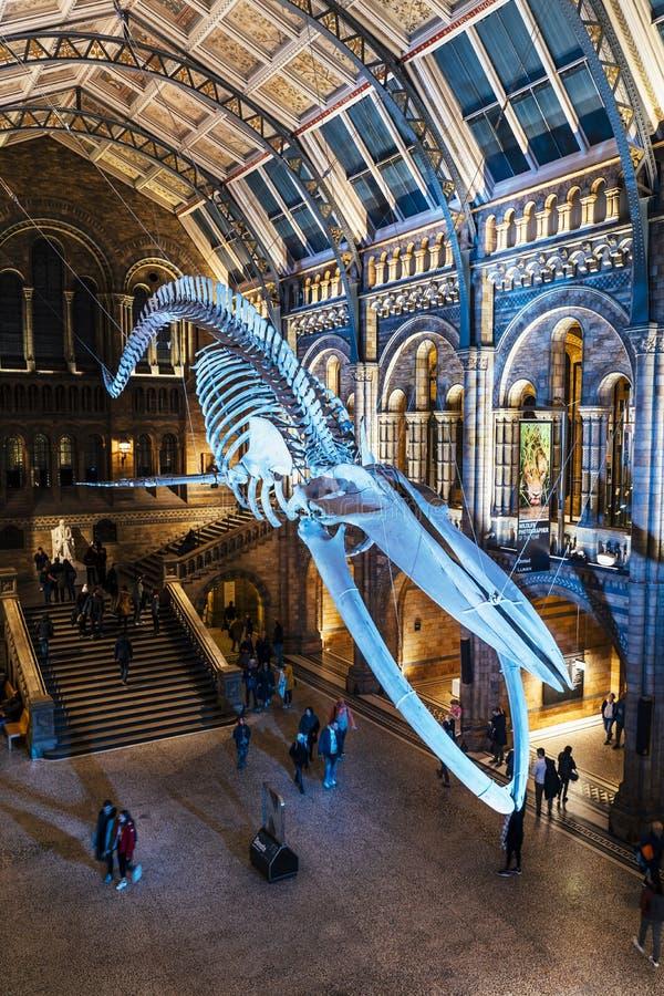 Huge dinosaur bones at Central Hall, Natural History Museum stock photos