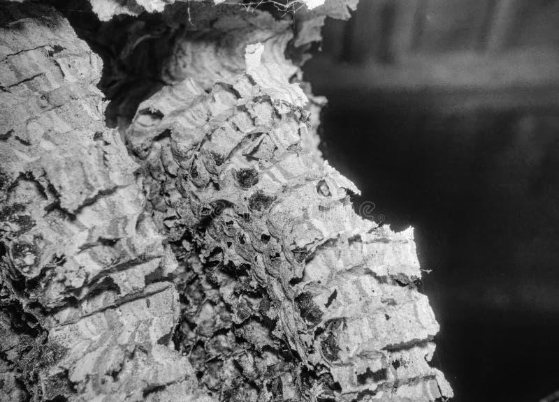 Huge european  wasp house. Abandoned nest stock photos