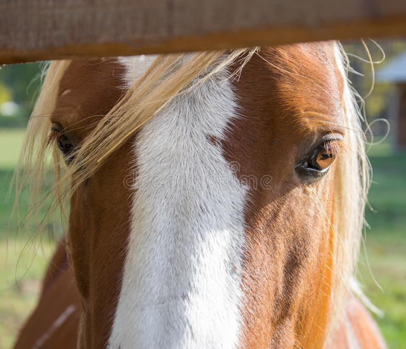 Huge eyes of a beautiful bay horse royalty free stock photos
