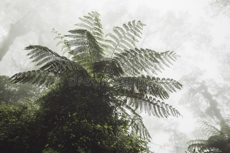 Huge fern in mystical tropical forest in fog royalty free stock photo