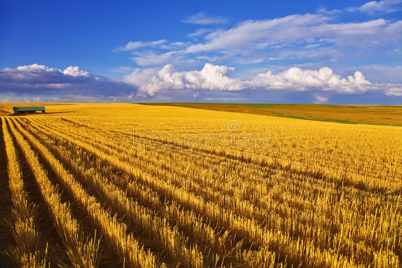 Huge field and small farm royalty free stock photos