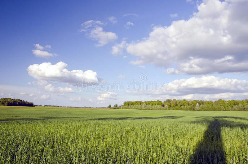 Huge green meadow and tree shadow. Cloudy blue sky royalty free stock image