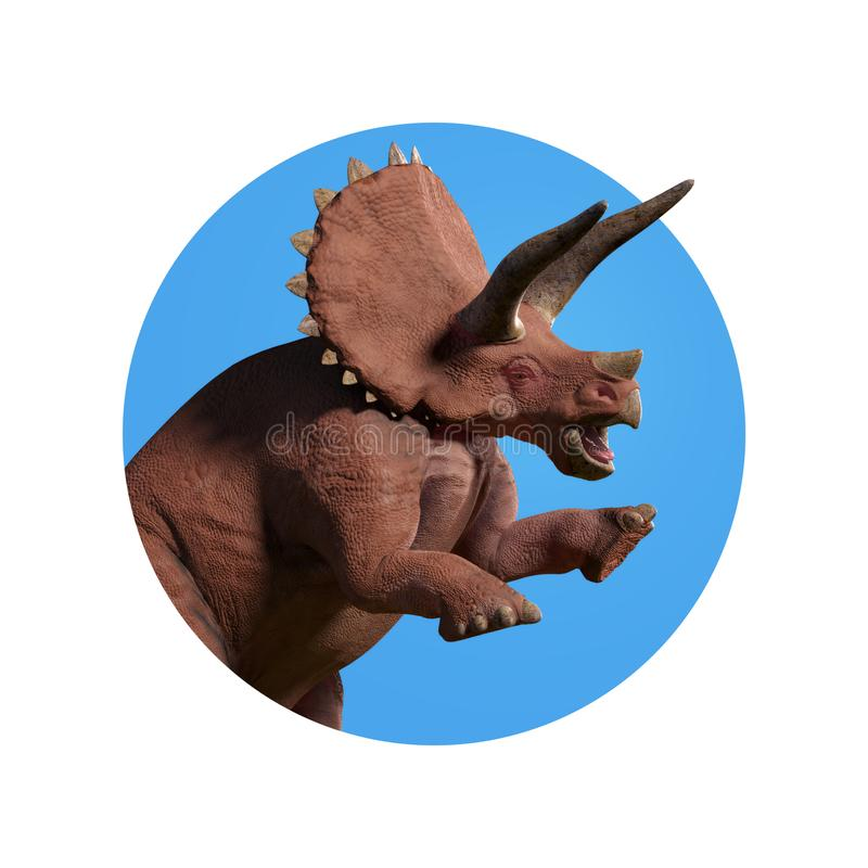 Triceratops horridus, close up Triceratops dinosaur looking through the wall 3d render isolated on white background. Huge herbivore dinosaur in natural colours royalty free stock photography