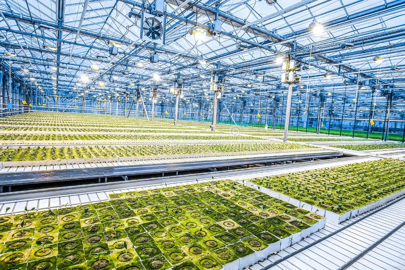 Huge hydroponic plantation system. With green plants, powerful lamps and big area - greenhouse royalty free stock photos