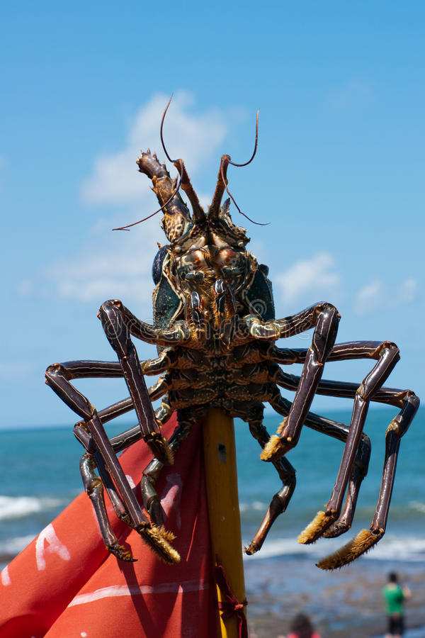 Huge Lobster Royalty Free Stock Photography