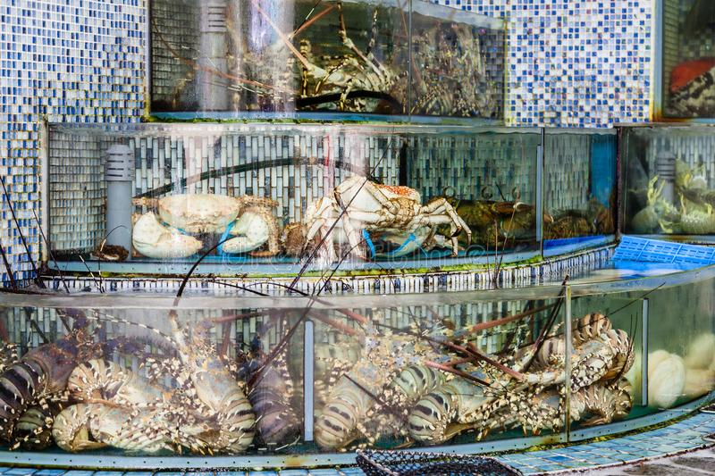 Seafood Market Fish Tanks in Sai Kung, Hong Kong. Huge lobsters, crabs and other mollusk seafood are crammed into fish tanks at the seafood market in Sai Kung stock images