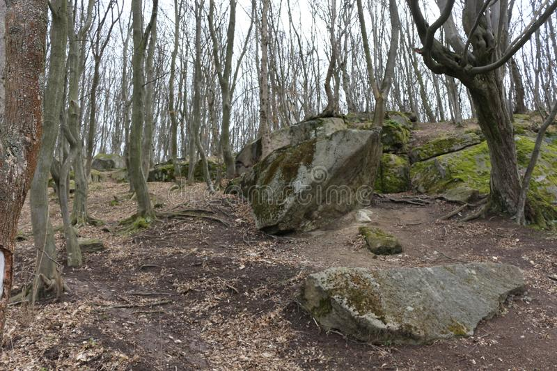 Huge moss-covered boulders lie on the slopes of the forest.  royalty free stock photo