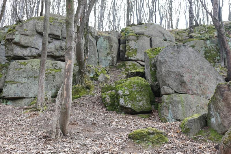 Huge moss-covered boulders lie on the slopes of the forest.  stock photography