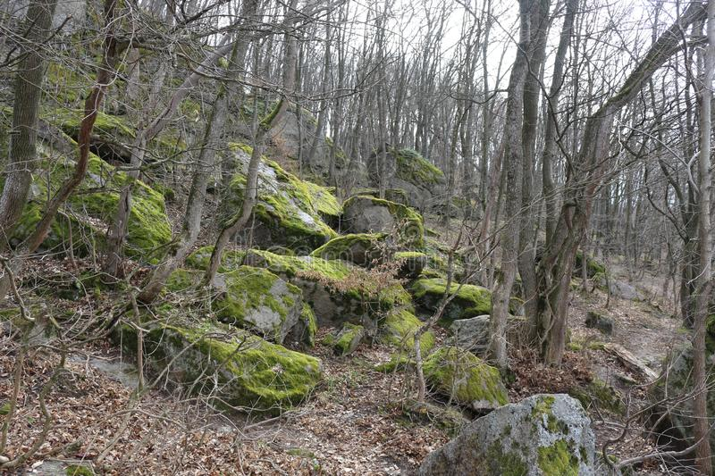 Huge moss-covered boulders lie on the slopes of the forest.  stock photo