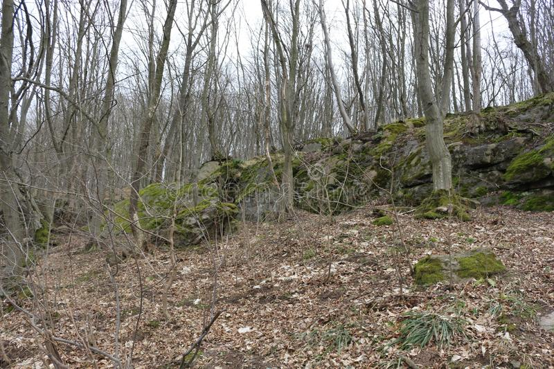 Huge moss-covered boulders lie on the slopes of the forest.  royalty free stock images