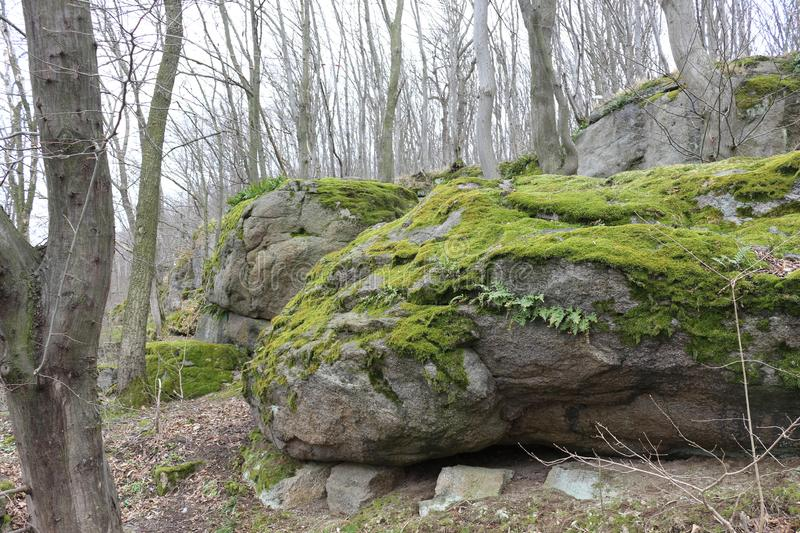 Huge moss-covered boulders lie on the slopes of the forest.  stock image