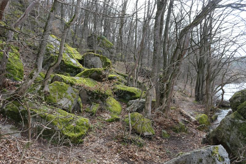 Huge moss-covered boulders lie on the slopes of the forest.  royalty free stock photography