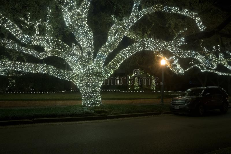 Huge oaks trees in the garlands of light. Christmas decor. Winter, Night, Houston, Texas, United States royalty free stock photography
