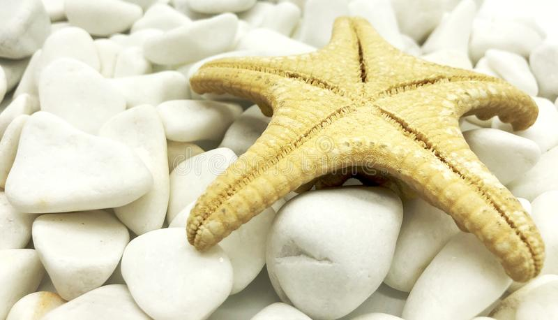 Huge ocean sea shellfish closeup white on stones perspective spa relax season vacation. Concept stock photo