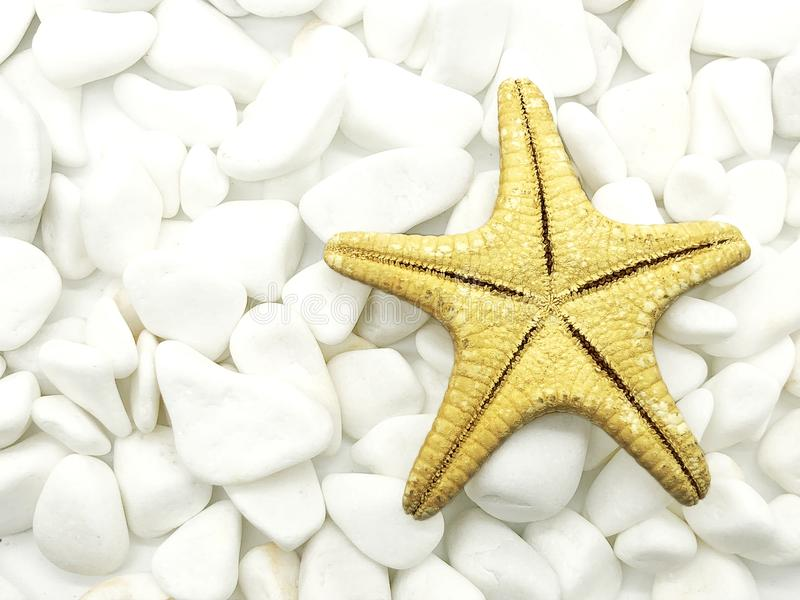 Huge ocean sea starfish closeup white on stones isolated spa relax season vacation. Concept royalty free stock images