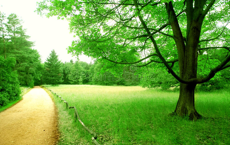 Download Huge park stock photo. Image of trail, field, natural - 30336192
