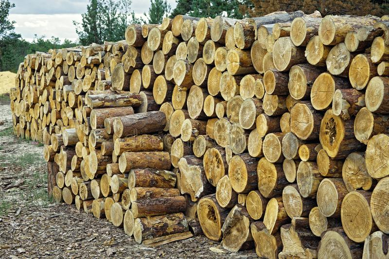 A huge pile of harvested wood in Siberia. A huge pile of harvested wood.Focus on the foreground stock images