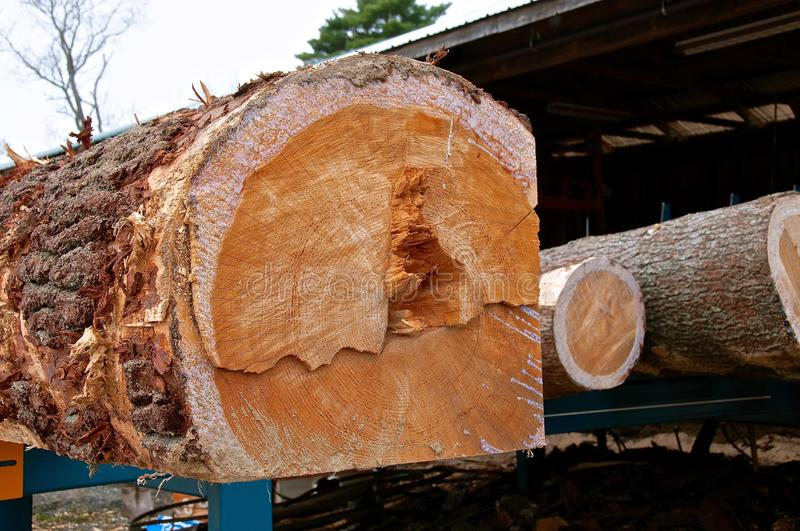 Huge pine log being squared for cutting into boards. A huge pine log is being squared for cutting into boards royalty free stock photography