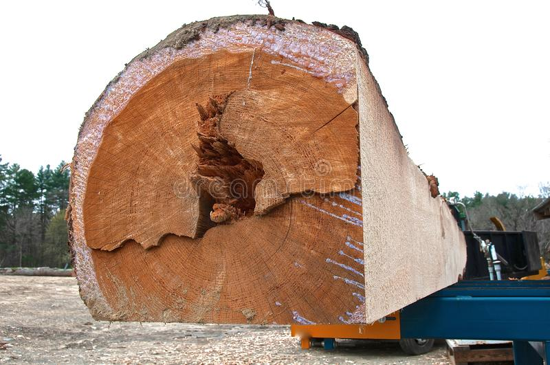 Huge pine log in the process of being squared. A huge pine log is being squared in preparation to be cut into dimensional lumber at a sawmill royalty free stock photo