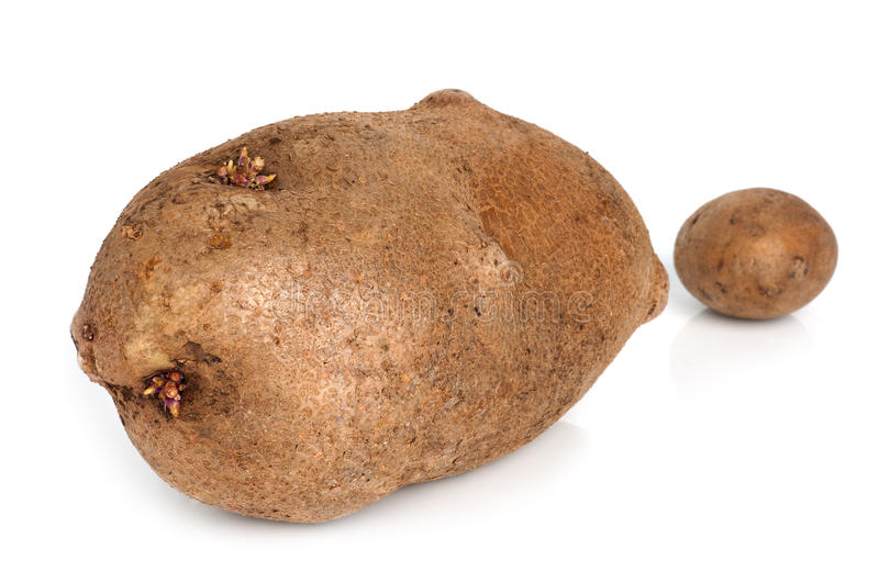 Huge potato royalty free stock photography
