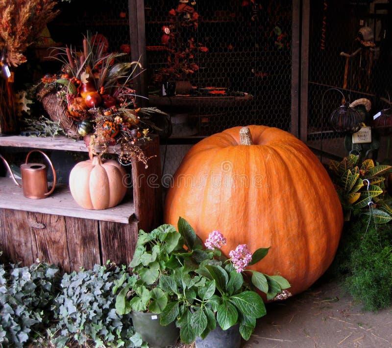 Download Huge pumpkin stock image. Image of store, decorated, season - 26344193