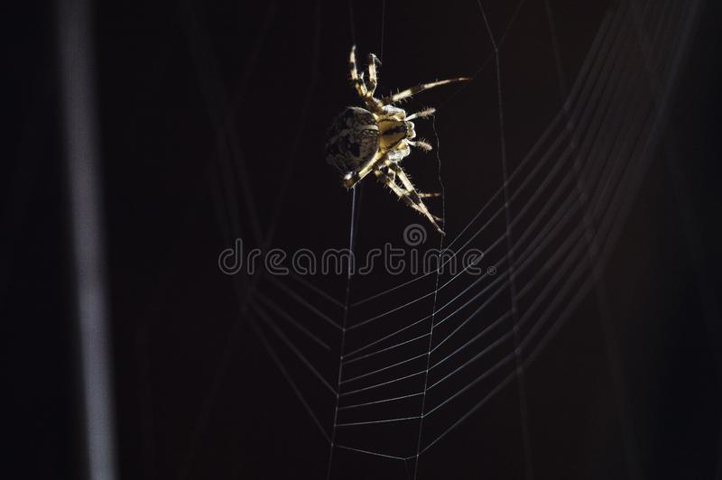 Huge scary and dangerous spider. Small but very dangerous creature. Beautiful and scary spider. Exotic Pet royalty free stock photography