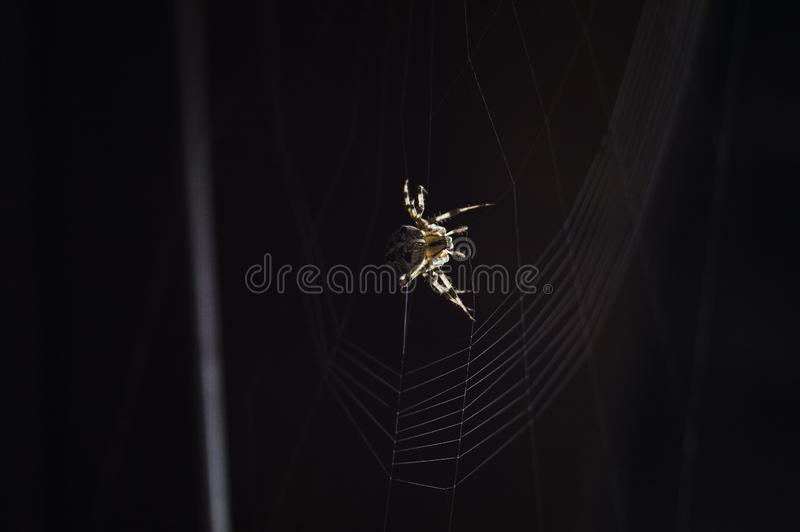 Huge scary and dangerous spider. Small but very dangerous creature. Beautiful and scary spider. Exotic Pet royalty free stock photo