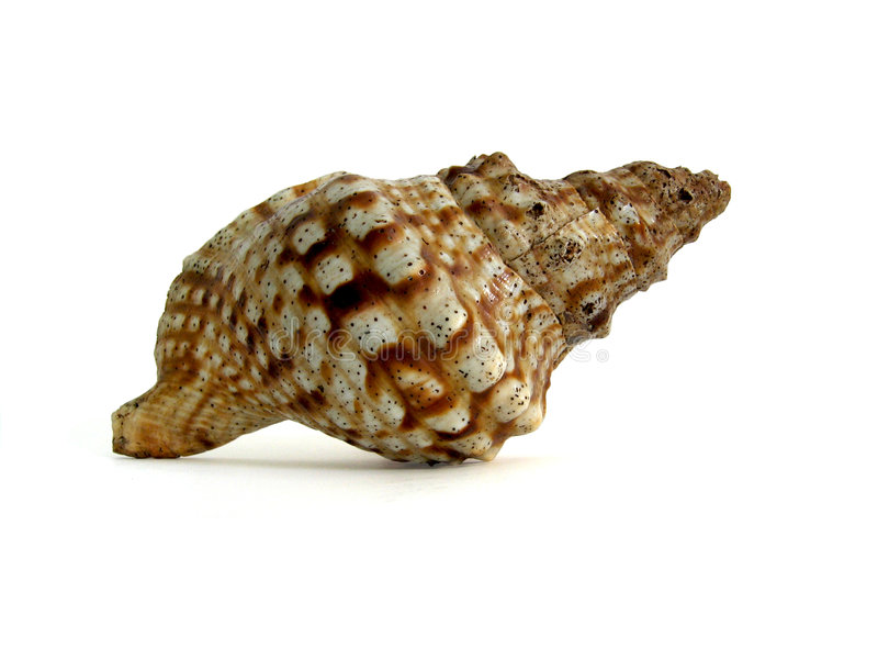 Huge Sea Shell stock photo
