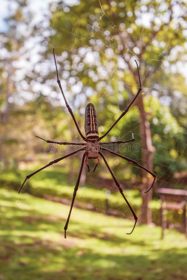 Huge spider on the web close up stock photography