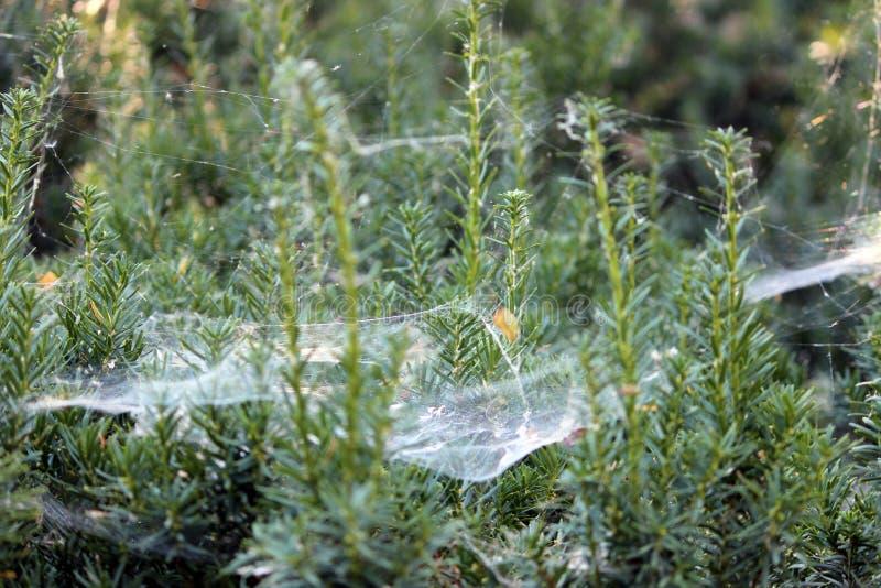 Huge Spider Webs. Large spider webs adorn the park at Julia Davis in Boise stock image