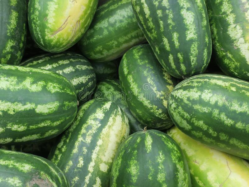Huge stack of green striped water melons royalty free stock photo