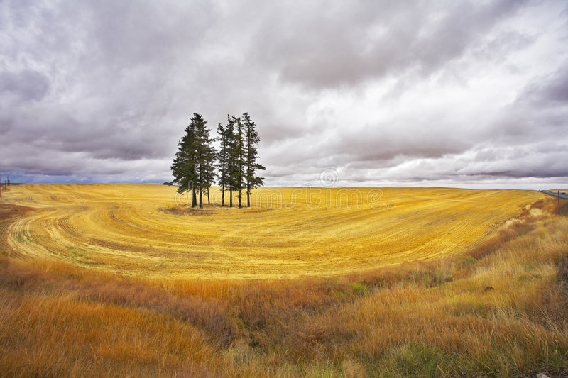 Huge thundercloud above a yellow field royalty free stock image