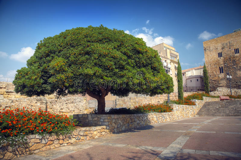 Download Huge tree stock photo. Image of heritage, travel, urban - 25532054